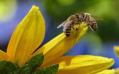 Wat je altijd al wilde weten over bijen
