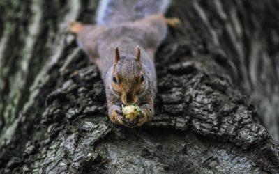 Wat je altijd al wilde weten over eekhoorns..