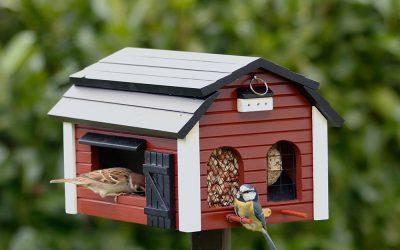Wat je altijd al wilde weten over vogels voederen